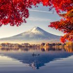 Colorful Autumn Season and Mountain Fuji with morning fog and re