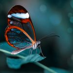 Beautiful butterfly sitting on flower in a summer garden